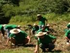 Filipinci u sat vremena posadili 3,2 milijuna sadnica drveća