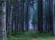 Svijet je za 30 godina izgubio 178 milijuna hektara šume