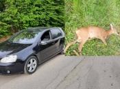 Neobična prometna na Ometalama: U naletu na automobil stradao srndać