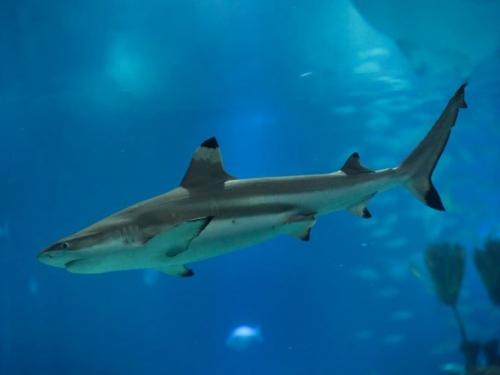 Sredozemno more propada, mnogim vrstama prijeti izumiranje