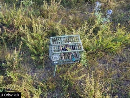 Mostarci krali ptice u Tomislavgradu