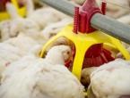 Kakvu piletinu jedemo u BiH, a kakvu bismo mogli jesti