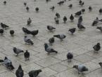 Sarajevo: Zbog ptičje gripe zabranjen promet, okupljanje i lov peradi