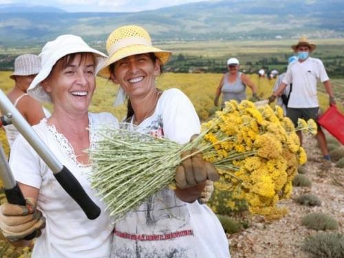 Nakon smilja Hercegovci planiraju pokrenuti sadnju začinskog bilja