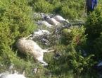FOTO: Grom na Proslapu ubio 15 ovaca