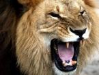 Lavovi pojeli tipove koji su ubijali nosoroge u Južnoj Africi
