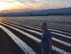 U hercegovačku zemlju zasađeno milijun sadnica paprike