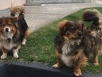 Ovo je pet stvari koje psi ne vole