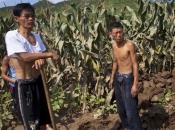 Sjevernoj Koreji nedostaje hrane