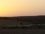 U Iraku očekuju temperature iznad 50 stupnjeva Celzijusa