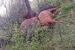 Na Proslapu grom ubio 9 krava