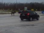 VIDEO  Kružnim tokom u Posušju prošetao bik