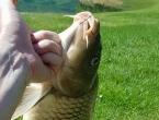 VIDEO: Ramsko jezero - raj za ribolovce!
