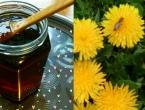 Med od maslačka: Jednostavan pripravak koji pomaže kod prehlade i kašlja