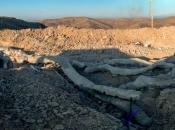 U Grčkoj nađeno okamenjeno stablo staro 20 milijuna godina