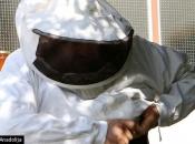 Bh. pčelar proizvodi pčelinji otrov koji košta do 70 dolara za gram