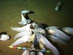 Otkrivena riba na rekordnoj dubini od 8.145 metara