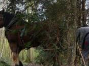 Jajce: Muškarac poginuo u šumi, udario ga konj pri izvlačenju drva