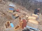 Medvjed na Paljikama uništio 14 košnica