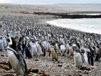 Oko milijun pingvina izašlo na obalu Argentine