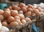 Bh. peradari žele izvoziti jaja u EU
