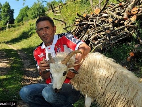 Prirodni fenomen ili mutacija: Kod Priboja ovnovi s četiri i više rogova