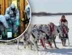 U Sibiru na površinu izbili leševi sobova zaraženih 40-ih
