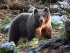 Tomislavgrad: Medvjed pojeo sav med i uništio pčelinjak