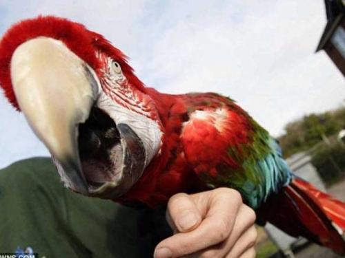 Neobičan incident: Posvađao se s djevojkinom papigom