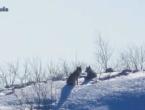 Vukovi na Ljubuši