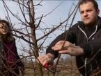Mladi bračni par vratio se iz Austrije u Slavoniju zbog uzgoja dunja i uspio
