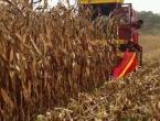 Odlične prinose kukuruza, prati i dobra cijena