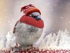 Toplo se obucite, niske temperature za vikend