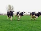 Odluka Makedonije o zabrani uvoza goveda iz BiH je neopravdana