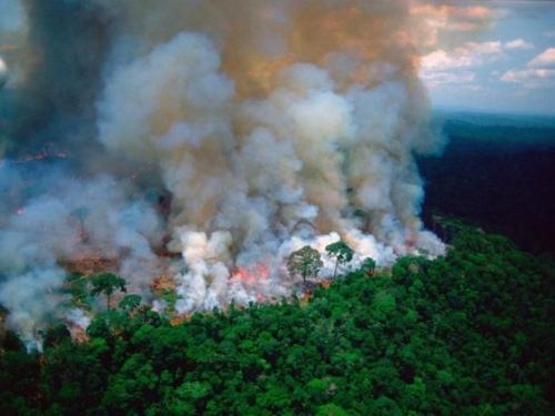 Koga briga za prašume?