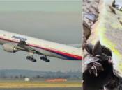 Obrat u slučaju misteriozno nestalog zrakoplova iz 2014. godine? Ribar na plaži pronašao olupine