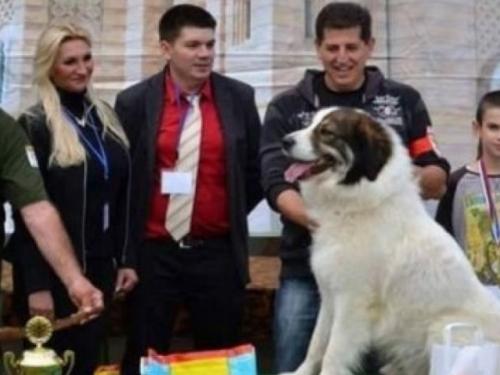 Tornjak iz Livna osvojio prvo mjesto na World Dog Showu