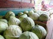 Poljoprivrednici nemaju kome prodati proizvode, samo jedan od njih je zakopao 50 tona kupusa