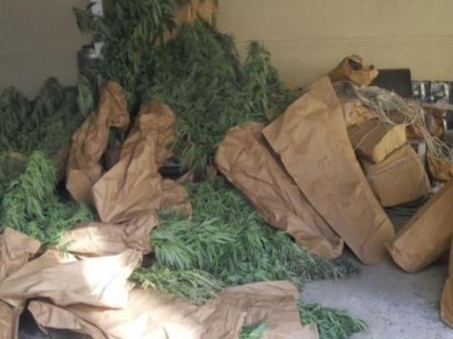 Uhićenja zbog droge u HNŽ-u: Umjesto mesa, na gredama sušili marihuanu