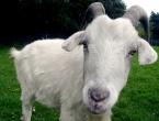 Obavijest o subvenciji veterinarskih usluga