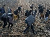 Vijeće ministara optužuje Srbiju i Crnu Goru da migrante preusmjerava u BiH! VIJESTI