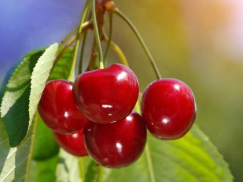 Jesu li trešnje supervoće?