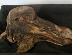 Kostur ptice dodo prodan za 405.000 eura