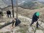 U Konjicu velika akcija pošumljavanja: Posađeno preko 3.000 sadnica bora