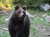 Kupres: Građani traže zaštitu od medvjeda