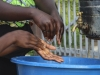 Otkriven prvi slučaj ebole u Gomi