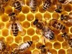 Ispovijest novinarke: ''Pčele me bodu svaki dan i to me spašava''