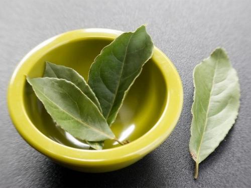 Čaj i sirup od lovora odlično pomažu protiv kašlja i grlobolje