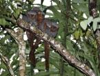 U Amazoni otkrivene stotine novih vrsta, sve su u opasnosti zbog uništavanja prašume