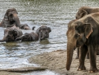 U Bocvani ubijeno skoro 90 slonova